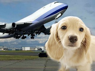 Pets are family for Best airline to fly dogs